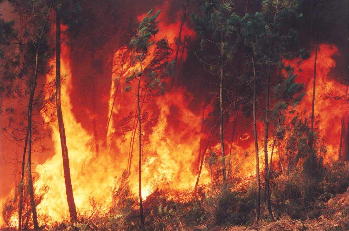 http://www.fiocruz.br/biosseguranca/Bis/infantil/fogo_florestal.jpg